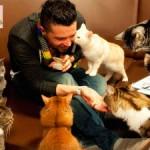 Kitty Сafe можно отдохнуть с кошками
